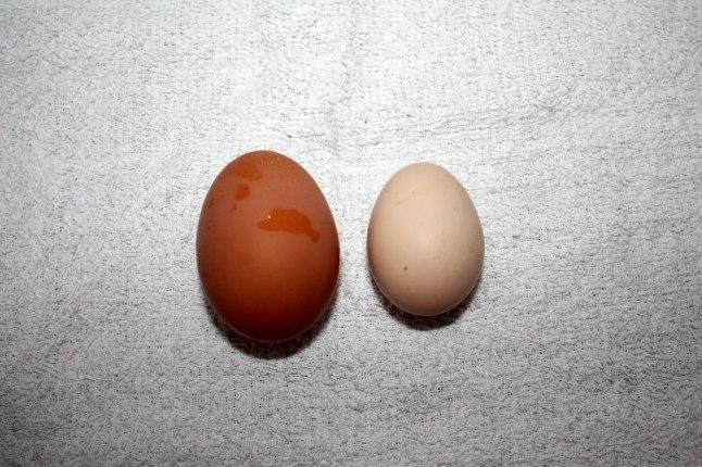 Buff Egg Left Rock Egg Right 7252013