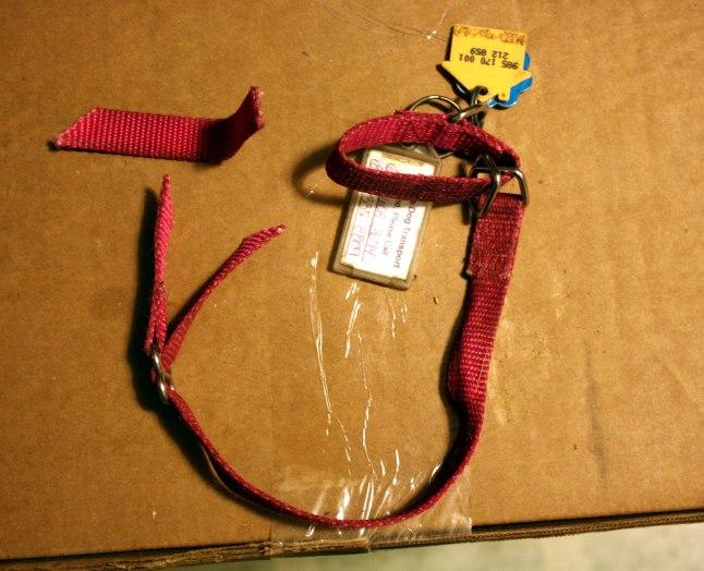 Layla's collar