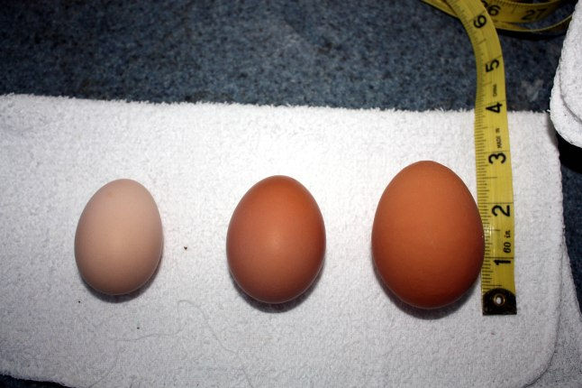 "Small Rock egg on the left; ""normal"" egg in the middle; ow-I-hope-the-poor-girl-gets-a-break-tomorrow-egg"